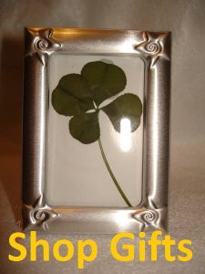 four leaf clover products